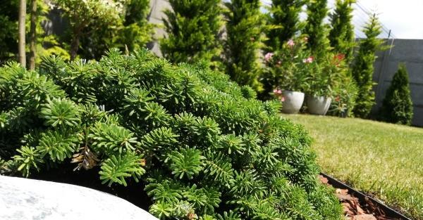 Mekkorák mostanság a heti kertfenntartás árak?